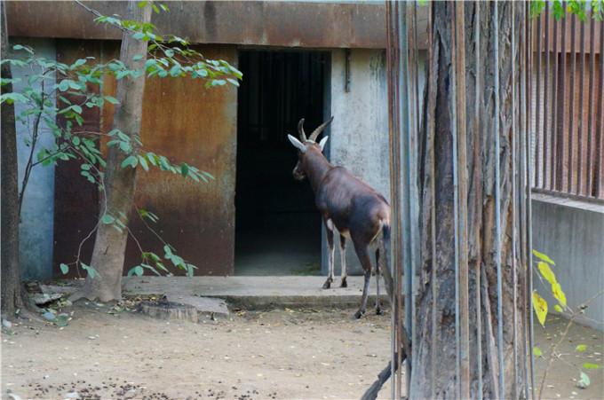 第n次的北京动物园