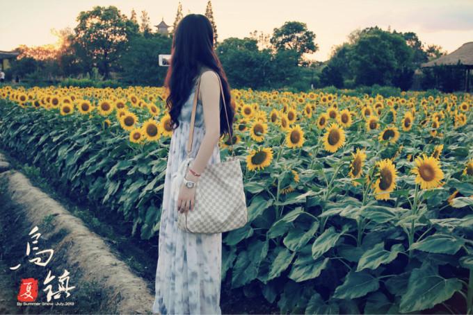 女孩背影向日葵手绘