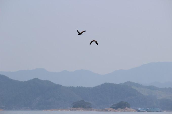 群猫吃鱼记,千岛湖旅游攻略 - 蚂蜂窝