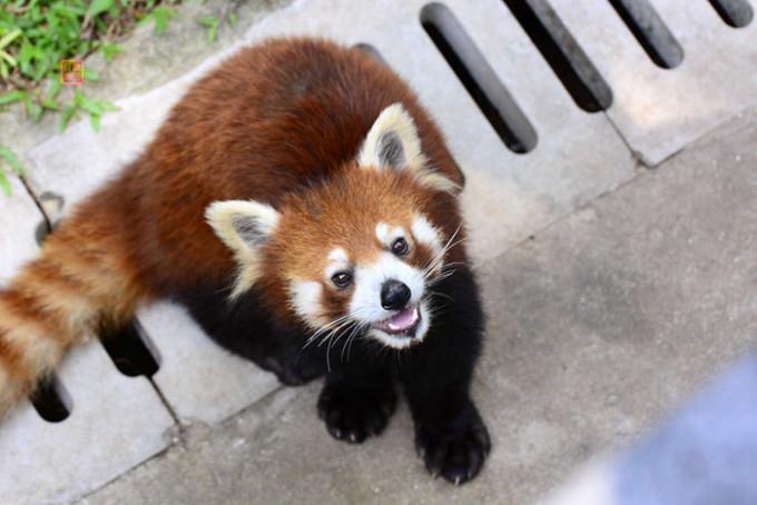 广州动物园----重寻儿时的记忆(2015)
