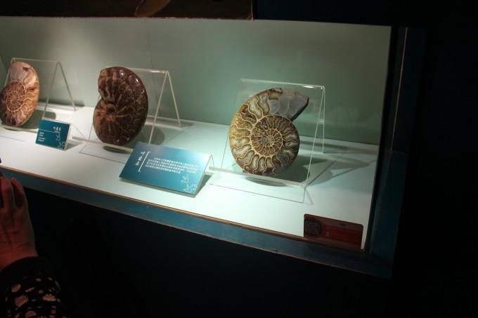 一种最古老的棘皮动物