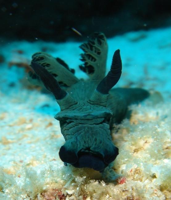 壁纸 海底 海底世界 海洋馆 水族馆 554_647