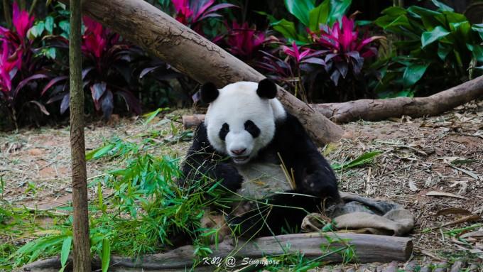 新加坡动物园以及夜间