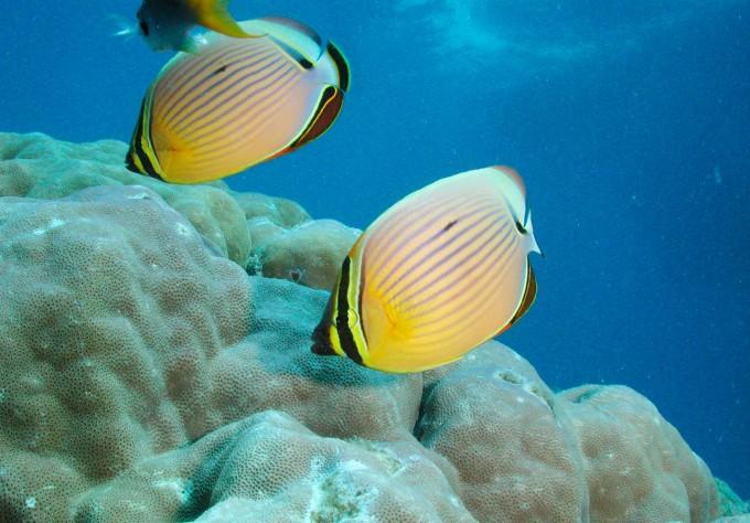 丰富的海洋生物 大堡礁海域生活着约1500种热带海洋