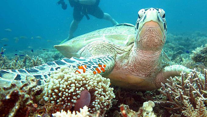 壁纸 动物 海底 海底世界 海洋馆 水族馆 鱼 鱼类 桌面 680_380