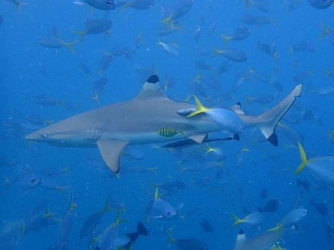 壁纸 动物 海底 海底世界 海洋馆 水族馆 鱼 鱼类 680_509