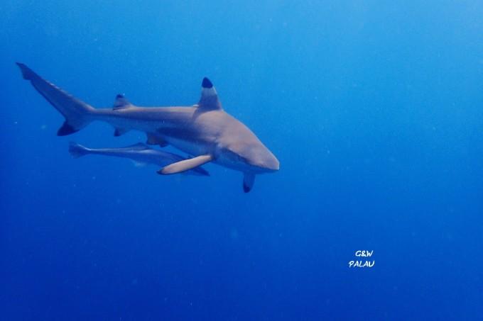 海里最可怕的动物